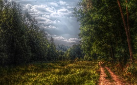 Forest, trees, path, clouds