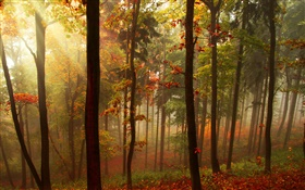 Forest, trees, sun rays, autumn HD wallpaper