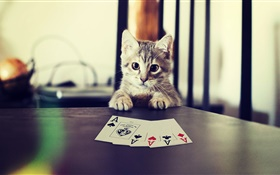 Funny pet, kitten playing poker HD wallpaper