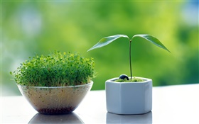 Germination bonsai, small trees HD wallpaper