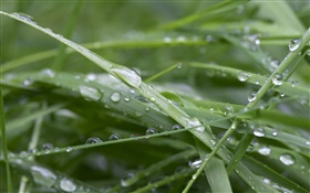 Green grass, after rain, water drops HD wallpaper
