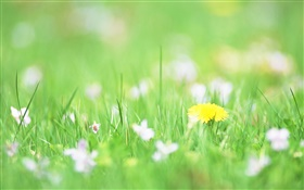 Green grass, yellow flower, bokeh HD wallpaper