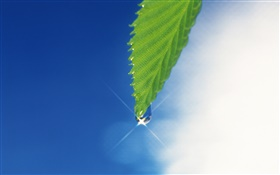 Green leaf, blue sky, glare, dew HD wallpaper