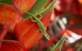 Green lizard, red petals HD wallpaper
