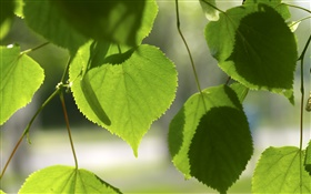 Green love hearts leaves HD wallpaper
