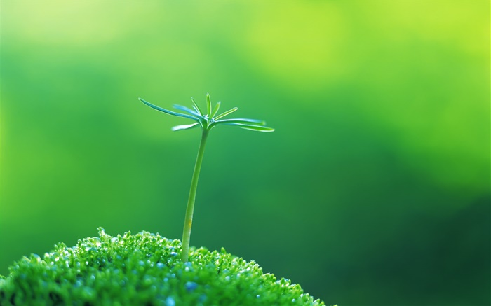 Green shoots close-up, spring Wallpapers Pictures Photos Images