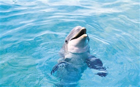 Happy dolphin, blue sea HD wallpaper