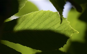 Leaf close-up, light and dark HD wallpaper