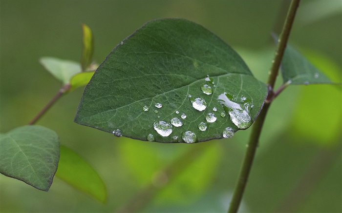 Leaf close-up, water drops Wallpapers Pictures Photos Images