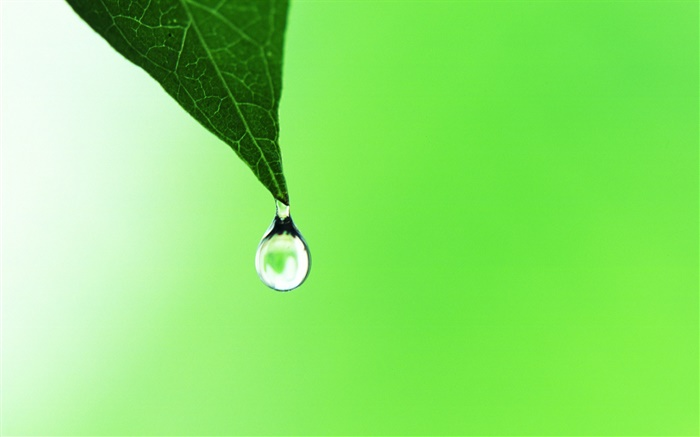 Leaf, dew, green background Wallpapers Pictures Photos Images
