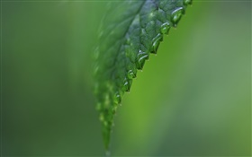 Leaf side close-up, water, green background HD wallpaper