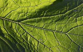 Leaf vein close-up HD wallpaper