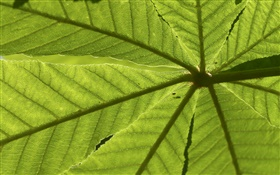 Leaves close-up, rear view HD wallpaper