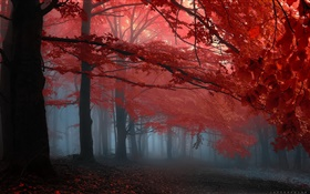 Mist, forest, trees, autumn, red leaves HD wallpaper