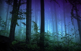 Morning, forest, trees, fog HD wallpaper