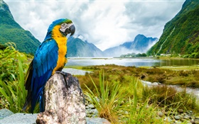 Nature parrot HD wallpaper