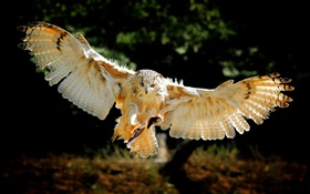 Owl flight wings HD wallpaper