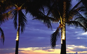 Palm trees, night, lights HD wallpaper