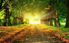 Park, road, trees, sun rays, autumn HD wallpaper