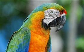 Parrot close-up HD wallpaper