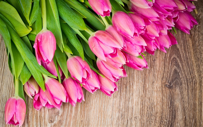 Pink tulips, wood board Wallpapers Pictures Photos Images