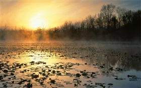 Pond, trees, fog, sunrise