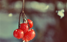 Red berries, bokeh HD wallpaper