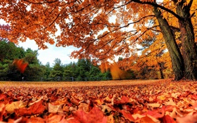Red leaves falling to ground, trees, autumn HD wallpaper