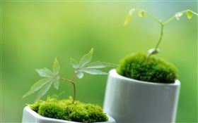 Small bonsai close-up, bokeh HD wallpaper