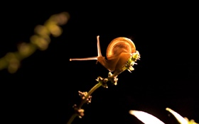 Snail, black background HD wallpaper