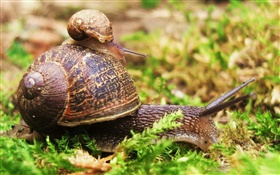 Snail mother and cub HD wallpaper