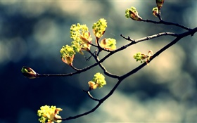 Spring, twigs, fresh leaves, bokeh HD wallpaper