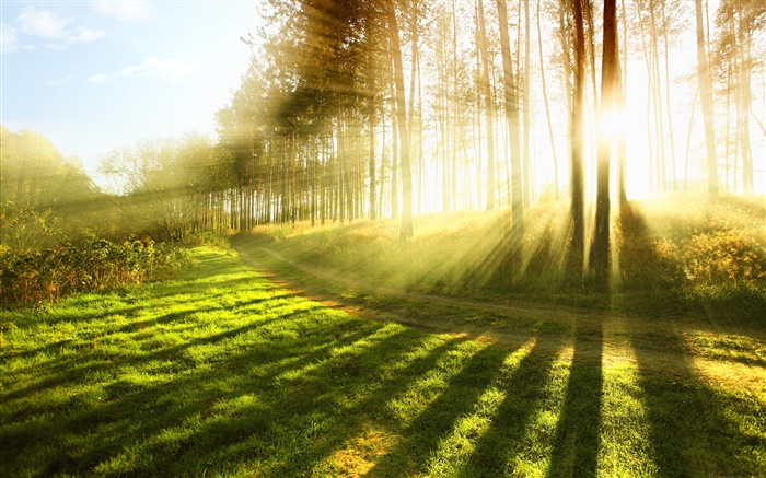 Summer forest, trees, grass, sun rays Wallpapers Pictures Photos Images