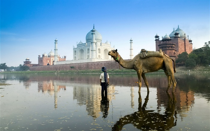 Taj Mahal, India, camel Wallpapers Pictures Photos Images
