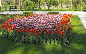 Tulip flowers in the park HD wallpaper