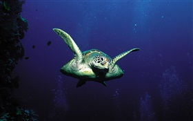 Turtles, deep-sea HD wallpaper