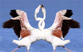 Two flamingos dancing HD wallpaper
