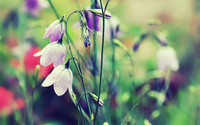 White bells flowers, bokeh Wallpapers Pictures Photos Images