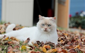 White cat, leaves HD wallpaper