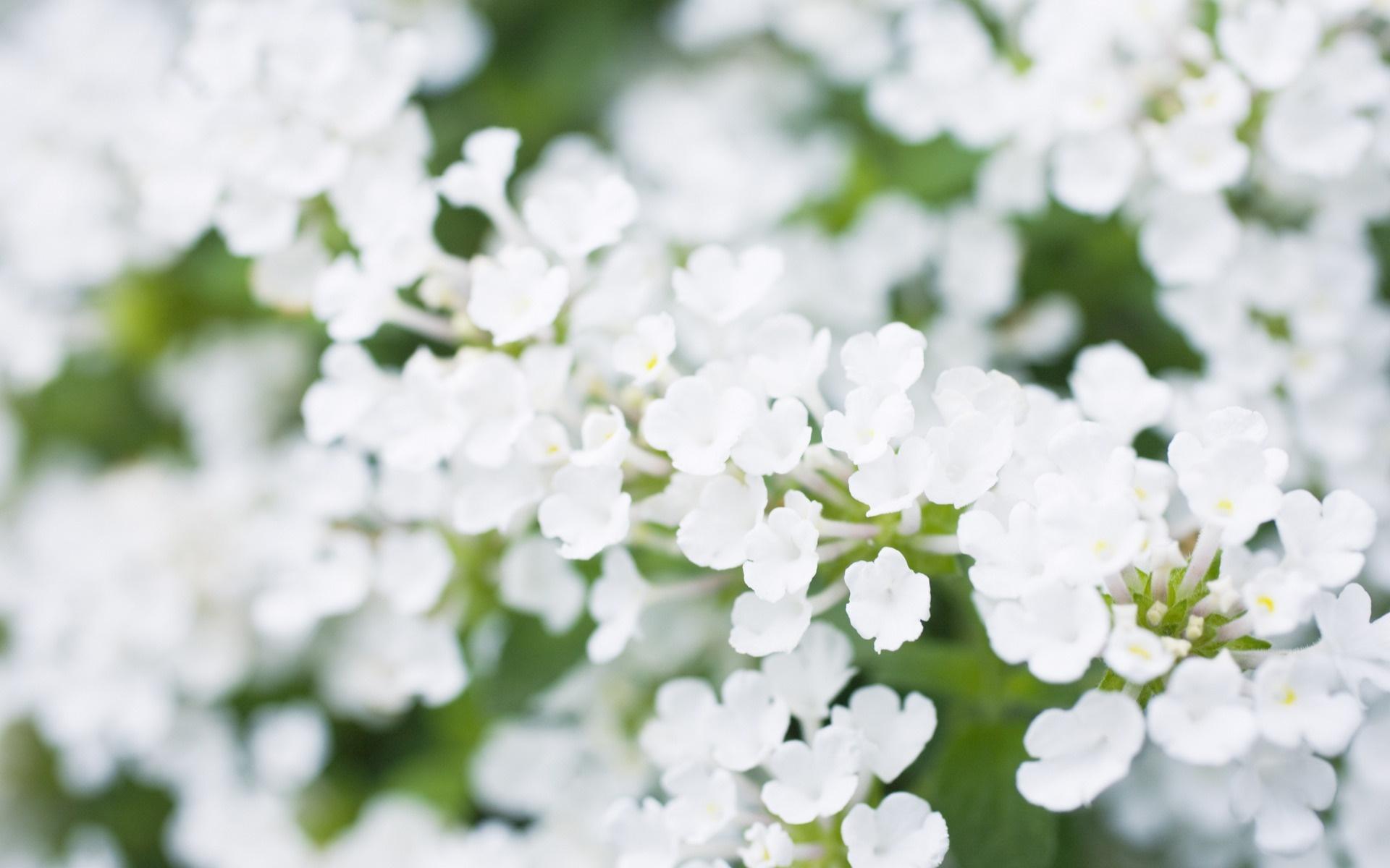 Фото и картинки белых цветов с названиями