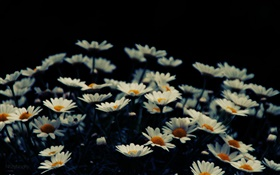 White little flowers, bokeh HD wallpaper