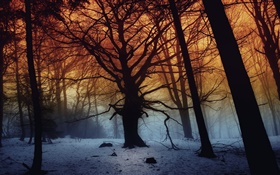 Winter, forest, trees, dawn HD wallpaper