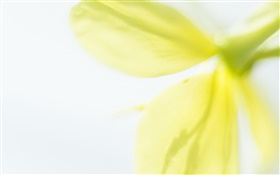 Yellow flower petals close-up, blurry HD wallpaper