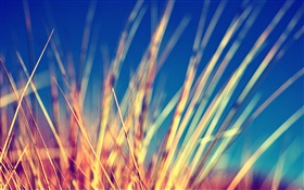 Yellow grass close-up, blurry HD wallpaper