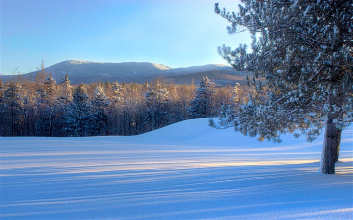 Bread Loaf Mountain, snow, trees, winter, Vermont, USA Wallpapers Pictures Photos Images