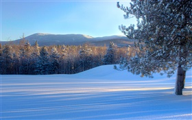 Bread Loaf Mountain, snow, trees, winter, Vermont, USA HD wallpaper