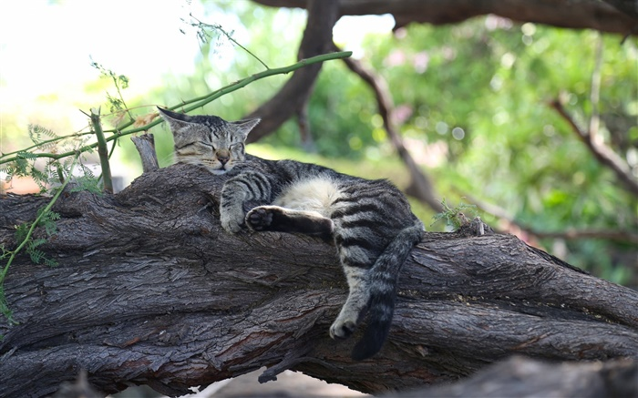 Cute kitten sleeping, rest, tree Wallpapers Pictures Photos Images