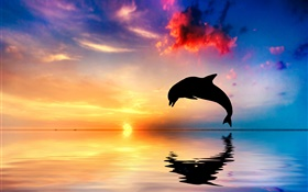 Dolphin jump, silhouette, ocean, water reflection, sunset HD wallpaper