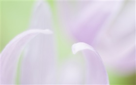 Flower petals close-up, blurry background HD wallpaper