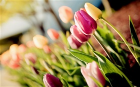 Flowers, tulips, purple, yellow, bokeh